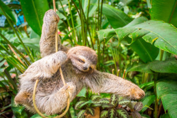Best Yoga Retreat in Costa Rica sloth
