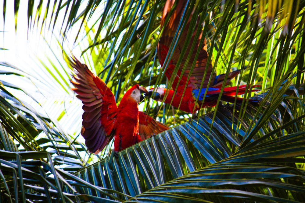 Best Yoga Retreat in Costa Rica